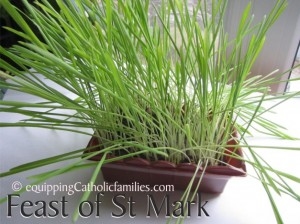 Feast of St Mark