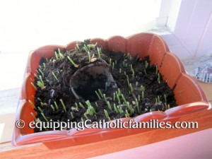 sprouting grass kit